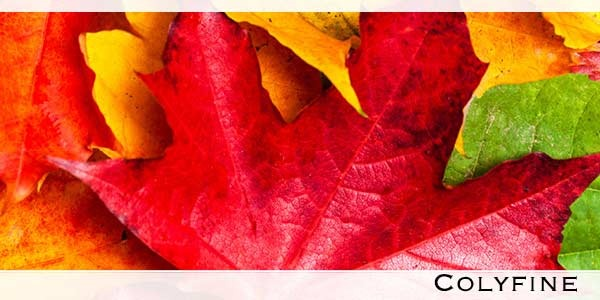 Instrukcja obsługi jesieni według COLYFINE